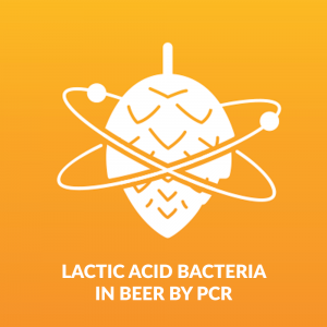Lactic Acid Bacteria in beer by pcr - Beer Brewing and Beer Testing Kit